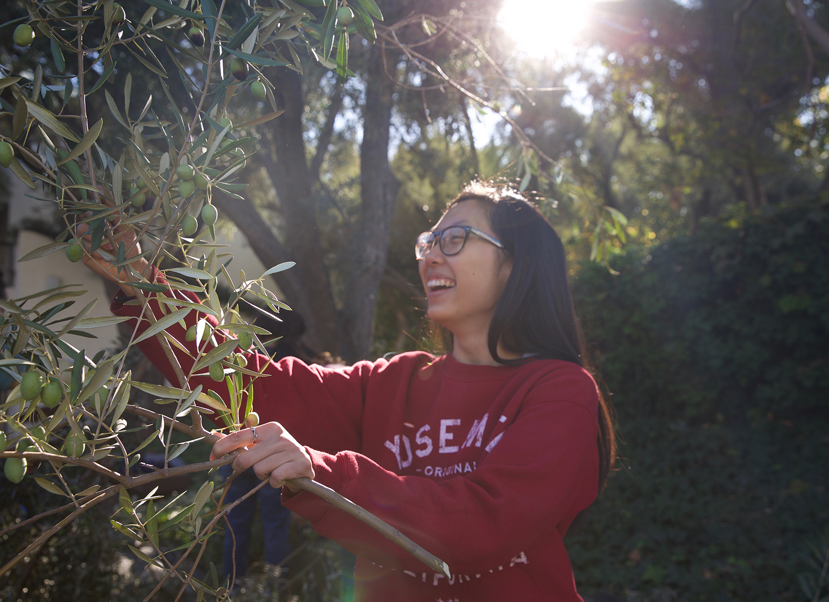 A young woman smiling while picking olives from an olive tree.